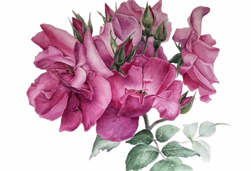 Выставка О розах и не только В Сочинском художественном музее